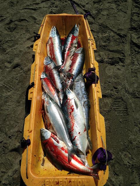 Kenai Red Salmon